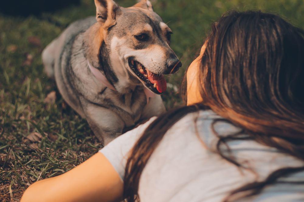 Ett husdjur behöver omsorg och vård